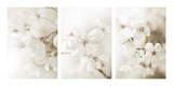 Vernus Triptych (sepia)