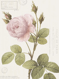 Boutique Fleurs II