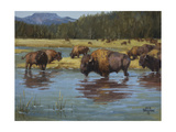 Buffalo Crossing