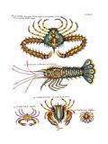 De haut en bas: crabe et scorpion dangereux mais comestible  écrevisse de Hourive