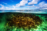 Beautiful Coral Garden Underwater  Diving on Maldives  Blue Cloudy Sky  Turquoise Water  Luxury Sum
