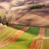 Autumn on Fields