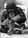 Feeding Cub