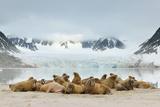 Walruses (Odobenus Rosmarus) Papier Photo par Yves Adams