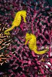 Des hippocampes Papier Photo par Georgette Douwma