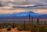Sonoran Desert Floor Papier Photo par Lawrence Goldman Photography