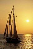 Sailboat Sailing in Golden Sunset Light  Miami  FL