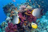 Coral Reef Scenery with Fish Papier Photo par Georgette Douwma