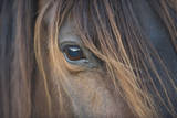 Close-Up of Crioulo Horse Looking at Camera