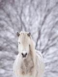 Snow Horse Papier Photo par Gigja Einarsdottir