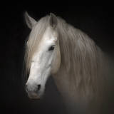 White Horse on Black