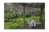 Wisteria Arbor  Duke Gardens  Durham  NC with Man (Botanical Gardens  South)