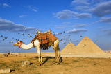 Egyptian Pyramids