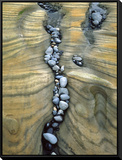 Rocks Caught in Sandstone Formations  Seal Rock Beach  Oregon  USA