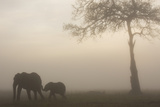 African Elephant Mother and Baby at Dawn