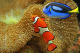 Clownfish and Regal Tang