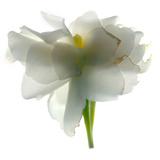 Gardenia Float
