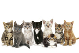 Kittens Line-Up Papier Photo