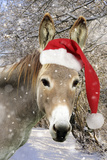 Donkey Wearing Christmas Hat in Snowy Scene