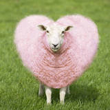 Sheep Ewe Pink Heart Shaped Wool