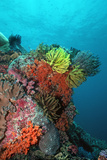 Coral Reef Underwater Scene of Coral Reef Papier Photo