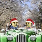 Meerkats Driving Car Through Snow Scene Wearing Papier Photo