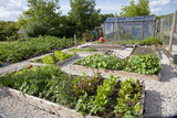Vegetables Growing in Raised Beds on Garden Plot