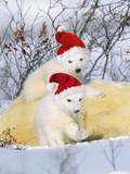 Polar Bear Two Cubs Wearing Christmas Hats