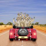 Meerkats in Car Waving Papier Photo