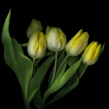 Yellow Tulips 3
