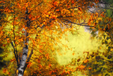 Fall Light 3