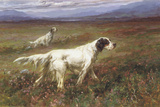 Setters on the Moors