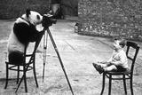 Panda Photographer