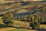 Vineyard and Olive Groves among Agricultural Field