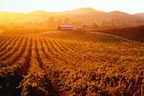 Usa  California  Napa Valley  Vineyards at Sunset