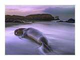 Northern Elephant Seal bull laying at surf's edge, Point Piedras Blancas, California Reproduction d'art par Tim Fitzharris