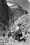 Mule Riders on Kaibab Trail
