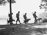 Soldiers and their Dogs Walking along the Shore