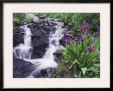 Waterfall and Wildflowers  Ouray  San Juan Mountains  Rocky Mountains  Colorado  USA