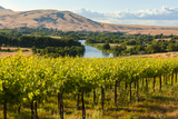 USA  Washington  Red Mountain Vineyard on with the Yakima River