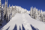 Ski Tracks Off of Lodi at Whitefish  Mountain Resort  Montana  Usa