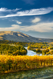 USA  Washington Harvest Season for Red Mountain Vineyards