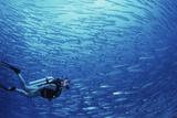 Indonesia  Scuba Diving in Sea