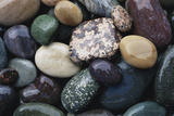 Pacific Northwest USA  Colorful River Rocks