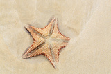 Caribbean, Anguilla. Close-Up Shot of Starfish in Sand Papier Photo par Alida Latham