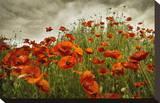 Bobbi's Poppies Tableau sur toile par David Winston