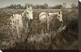Chevaux blancs Tableau sur toile par David Winston