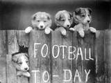 Dog Football Fans