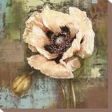 Papaver I Poppy Flower