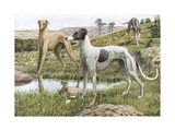 Greyhounds in Country